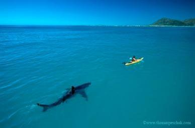 tiburon kayak