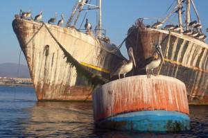 limpieza casco barco