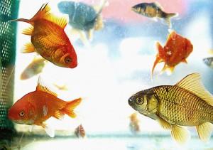 caracteristicas de los peces